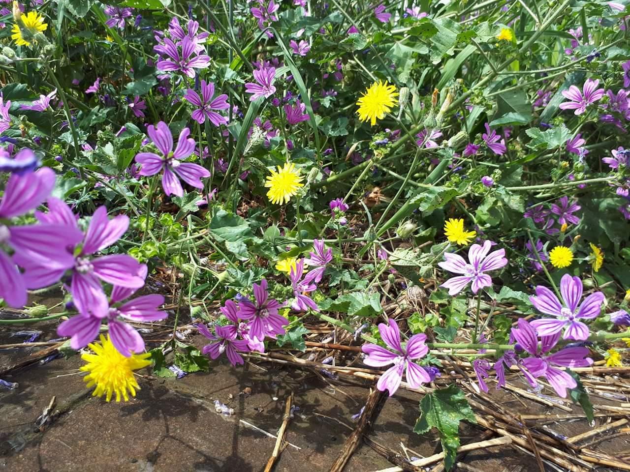 mangiaradio-2-25-sapori-di-primavera